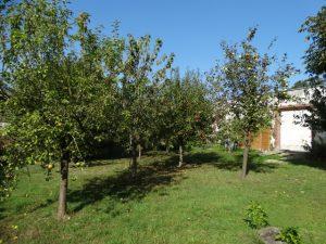 Gite du petit Colombier à Arras : le jardin et son verger